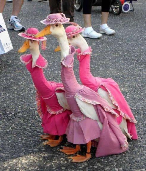 patos en vestido