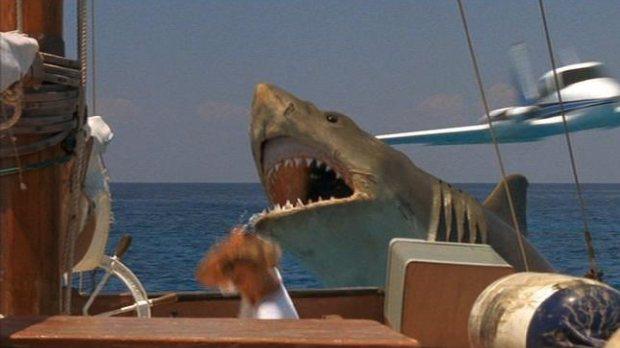 tiburon al ataque