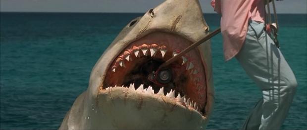 tiburon bomba