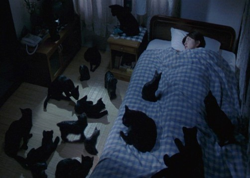 cat night all the night