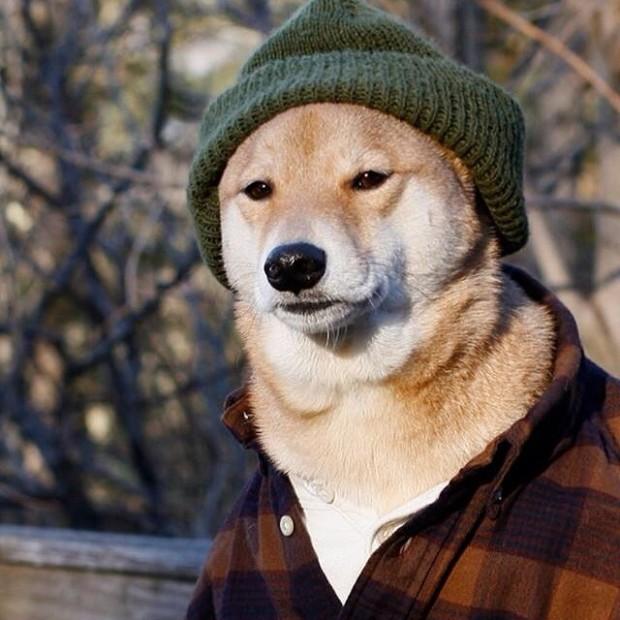 lumberdog