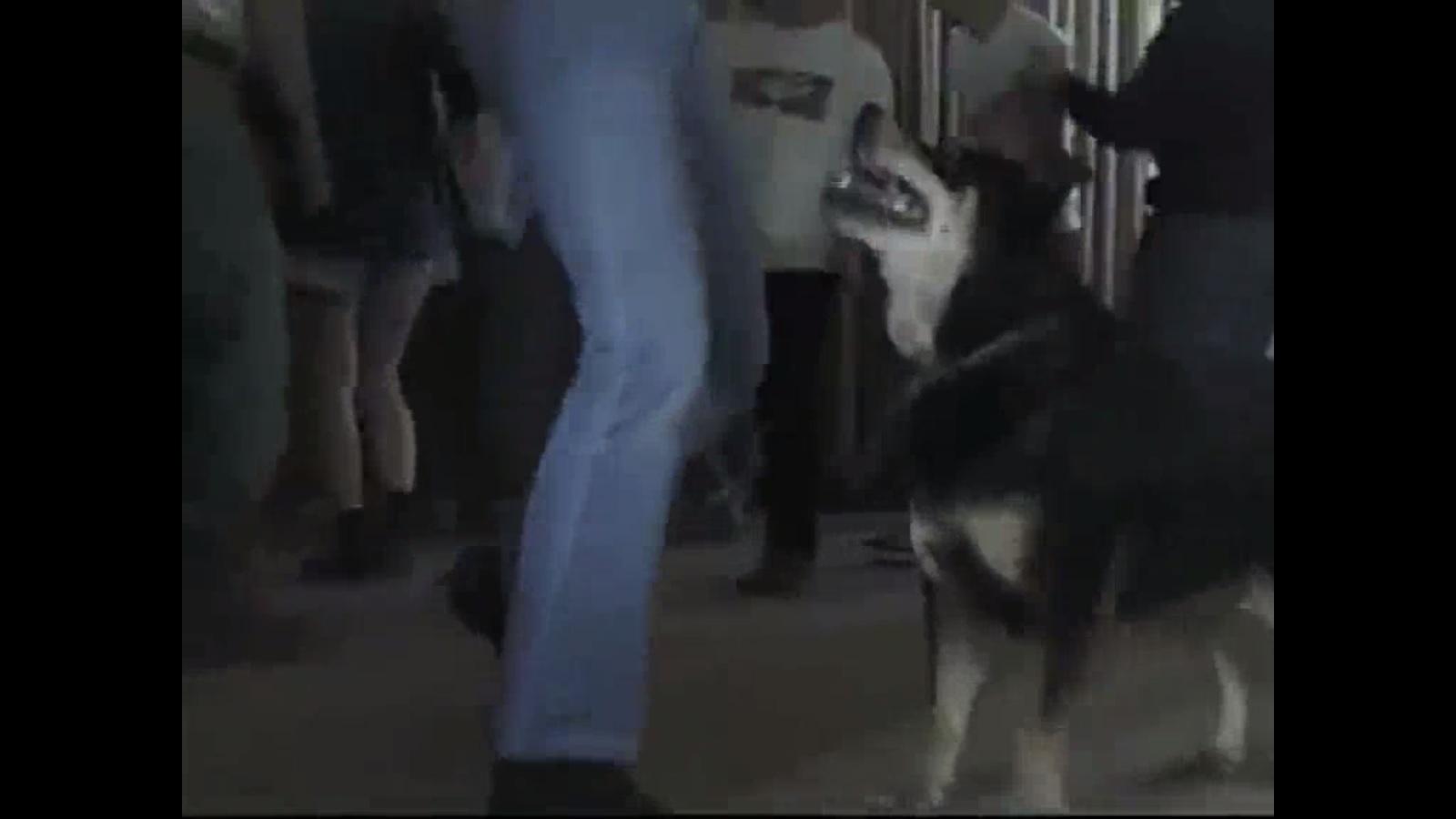 incluso hay un perro en la reunion, who made this acaso el perro era un estudiante, de seguro era el aplicado del grupo.jpg