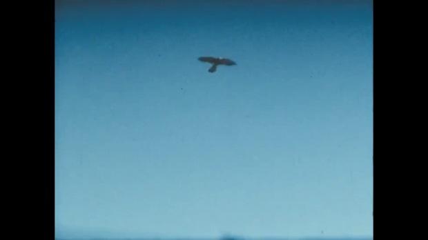 los pajaros vuelan.jpg
